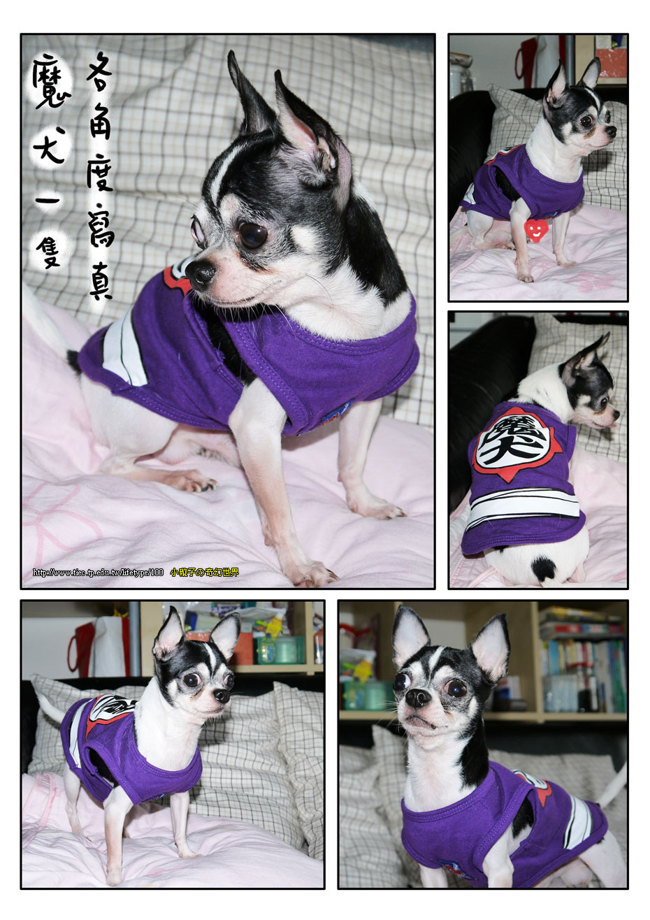 201012dog_2.jpg